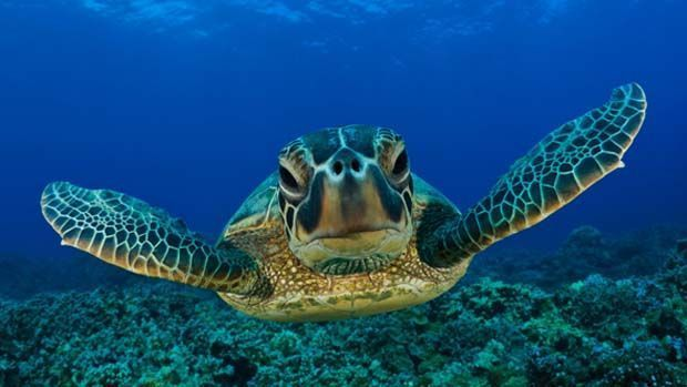 tortuga-boracay