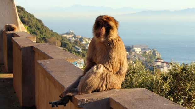 Trabajar en Gibraltar