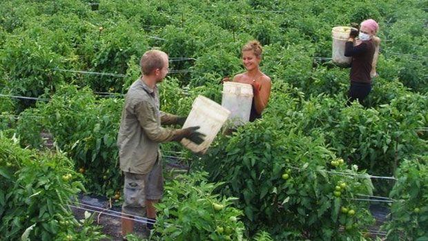 Trabajar en agricultura en el extranjero, con contrato desde España