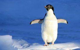 Viaje a la Antártida