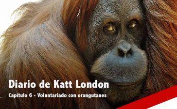 Voluntariado con orangutanes